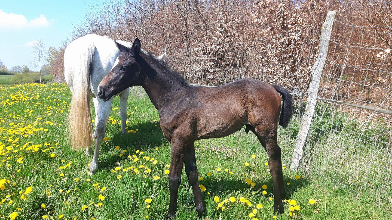 Perugino, 5 Wochen alt