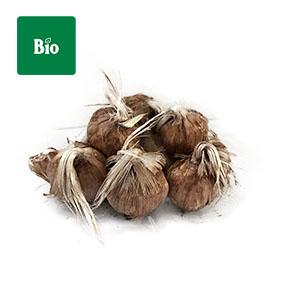 Bulbos bio organico