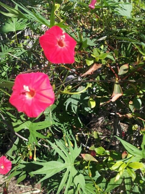 九品仏のお花