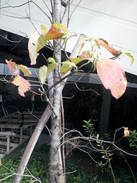 秋のヒトコマ
