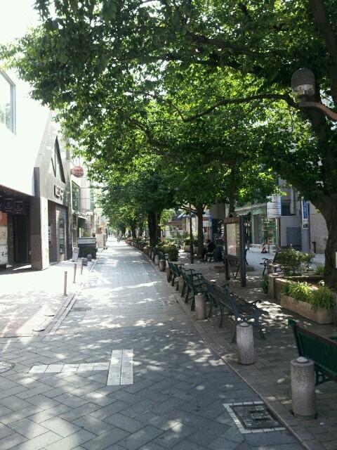 朝の自由が丘緑道