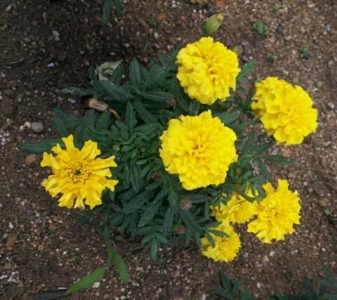 自由が丘駅前の花壇