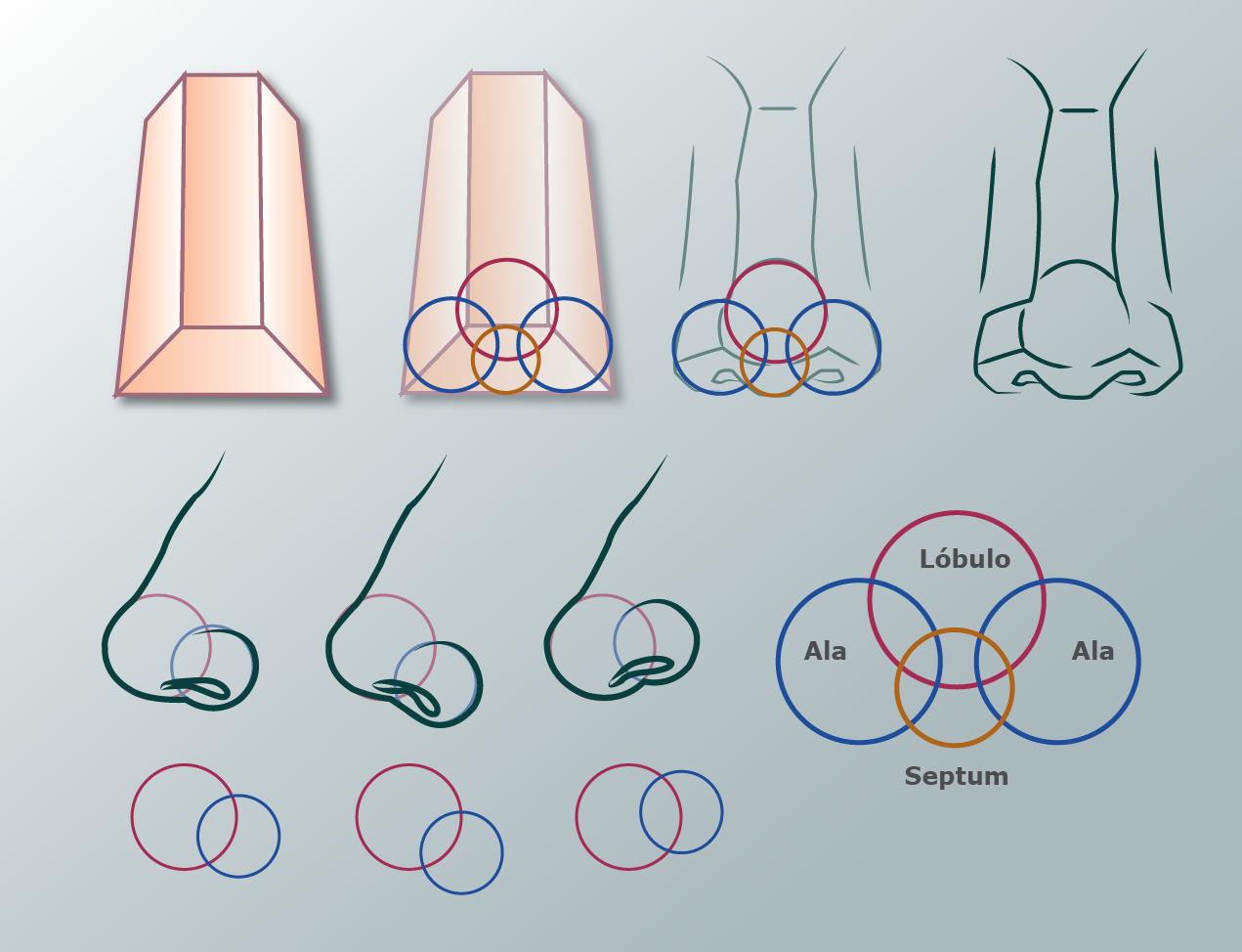 Cabeza y proporciones del rostro - Guía Poly-Clay