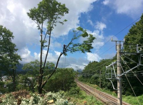 ウッドタワー工法による鉄道近接木伐採の様子。