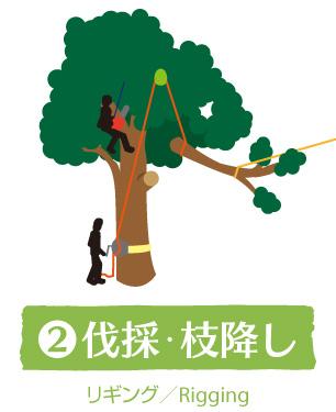 2:伐採・枝降ろし(リギング/Rigging)|ウッドタワー工法