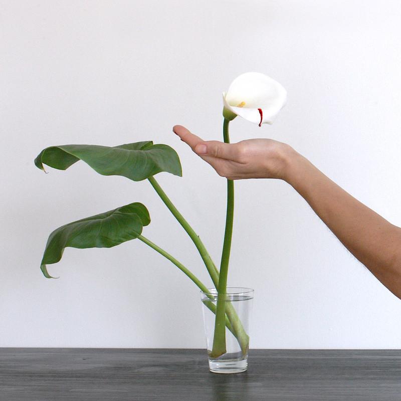 """""""Néctar"""" 2009."""