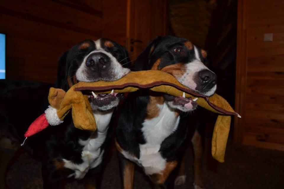 Bose & Bella