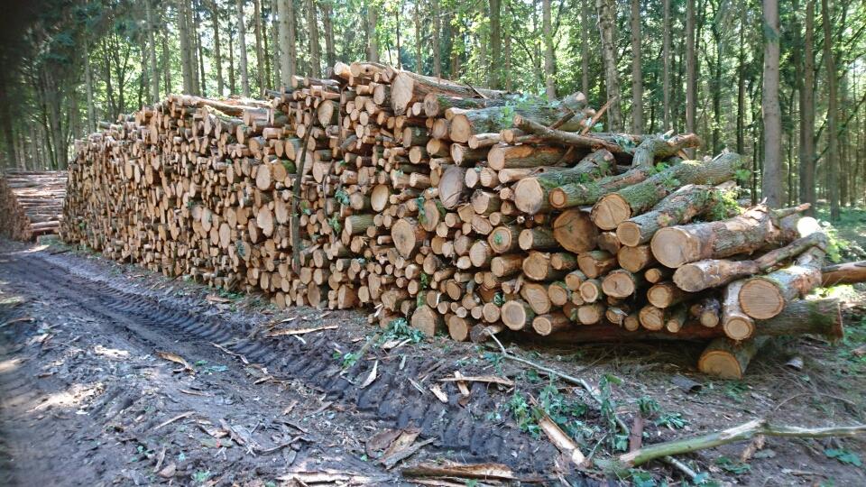 Eiche Industrieholz