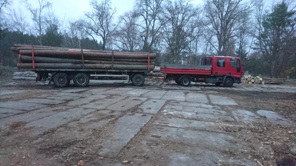Lärchenstammholz zum Abtransport ins Sägewerk vorbereitet