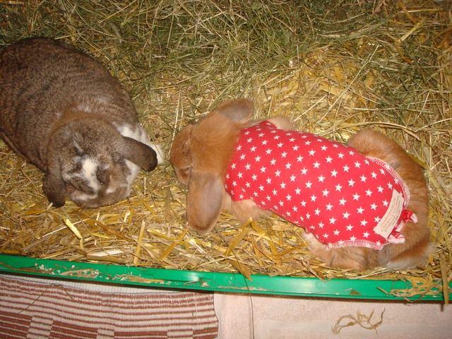 Amy vom Bunny Village vielen Dank für das Foto
