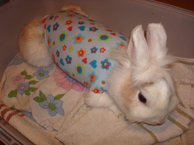 Mia vom Bunny-Village Danke für das Foto