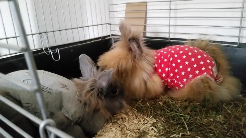 Milli (grau) und Elli (rot)