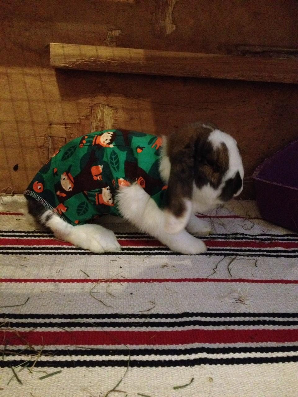 Barney - - Kundenfoto - vielen Dank