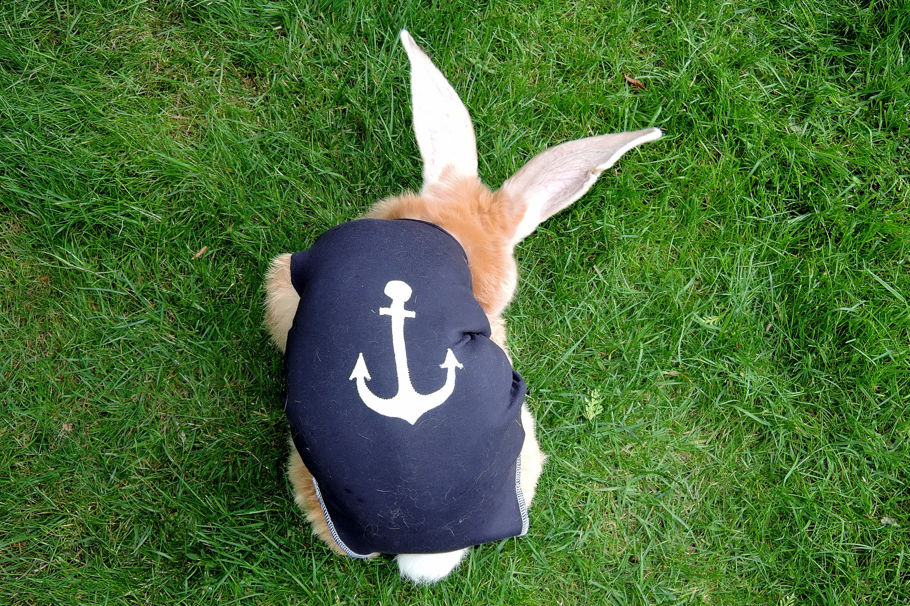 ***bunnywear-exclusiv*** Design, Modell: Finchen