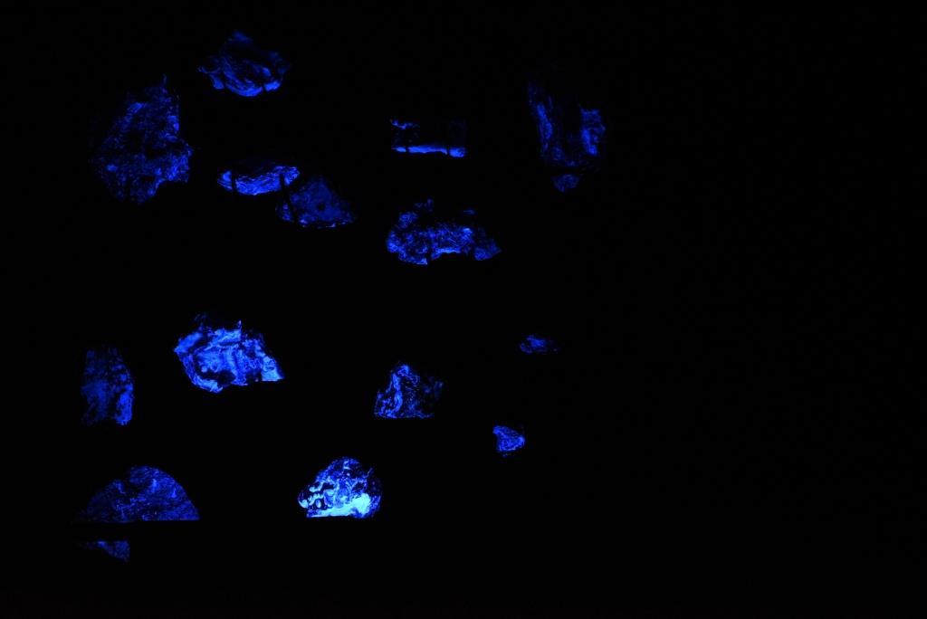 fluorescence au cap de la chèvre