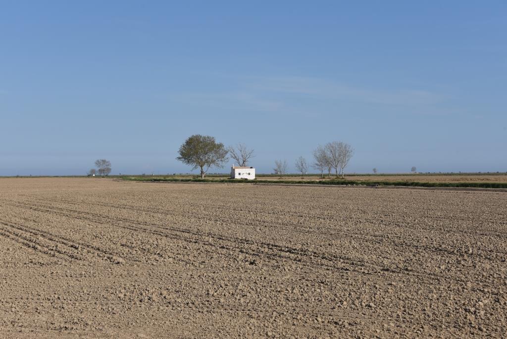 champs de riz en préparation