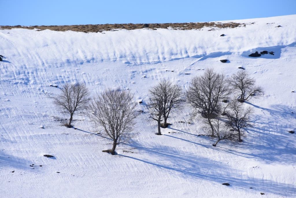 hiver en Aubrac
