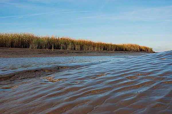 slick or silt at low tide along the river elbe
