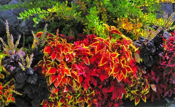 Die kräftigen Farben im Herbst ein Ausdruck von Willenskraft