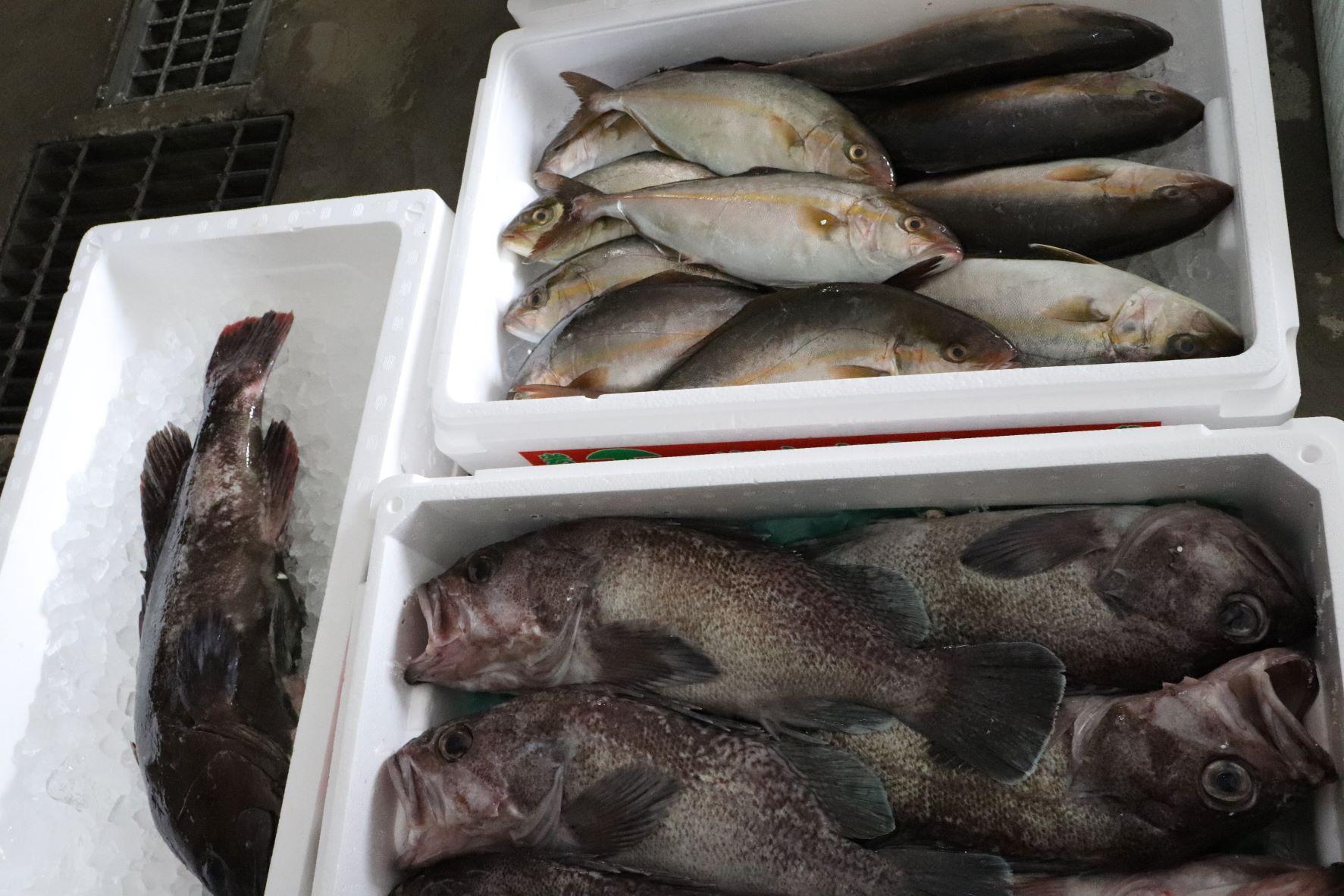 いろんな魚を入荷!