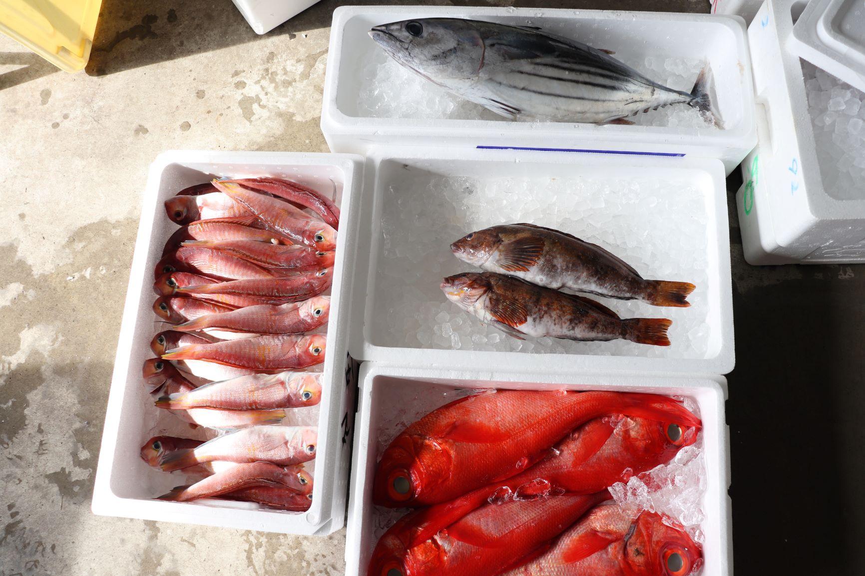 4種の魚!
