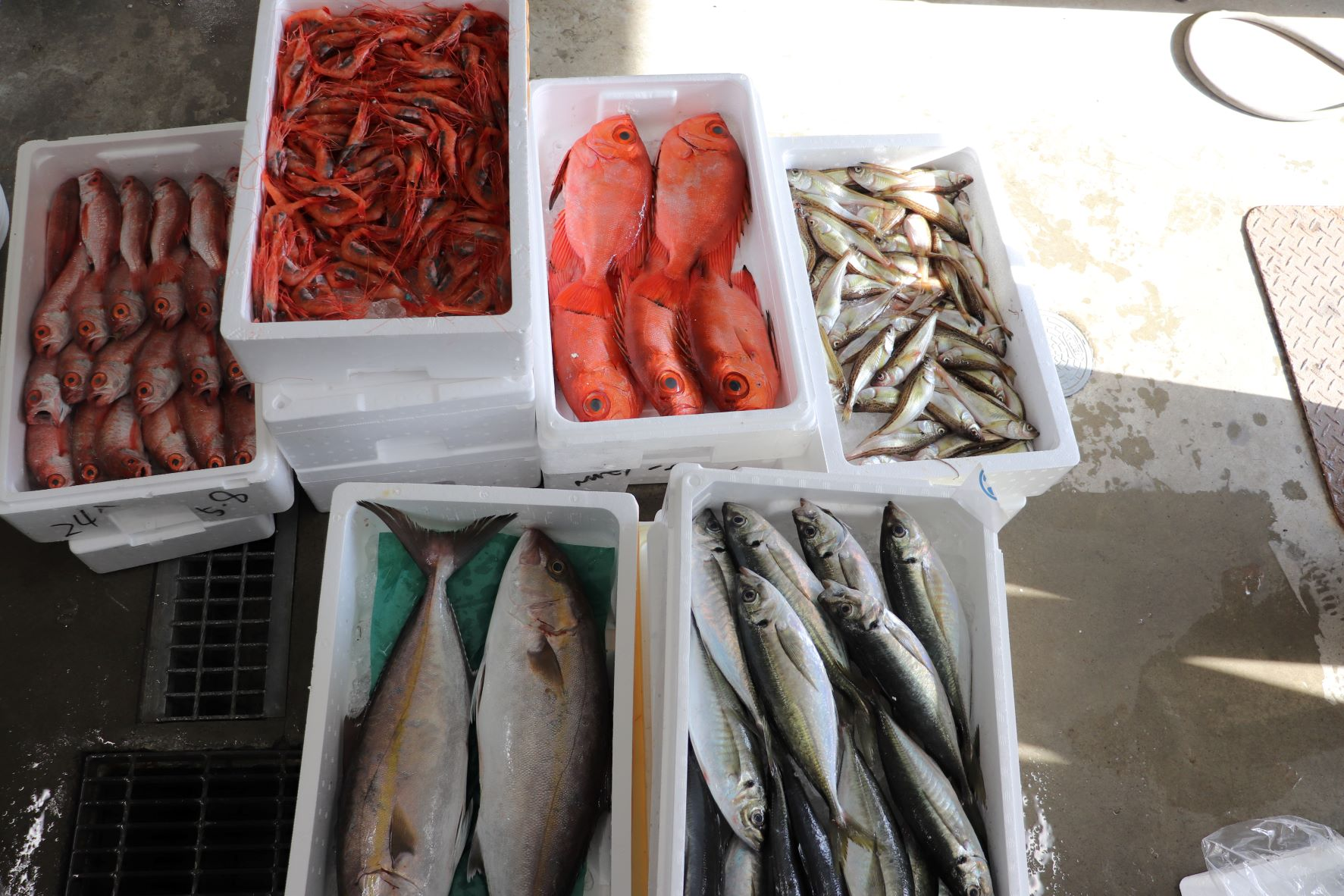 たくさんの魚を入荷!