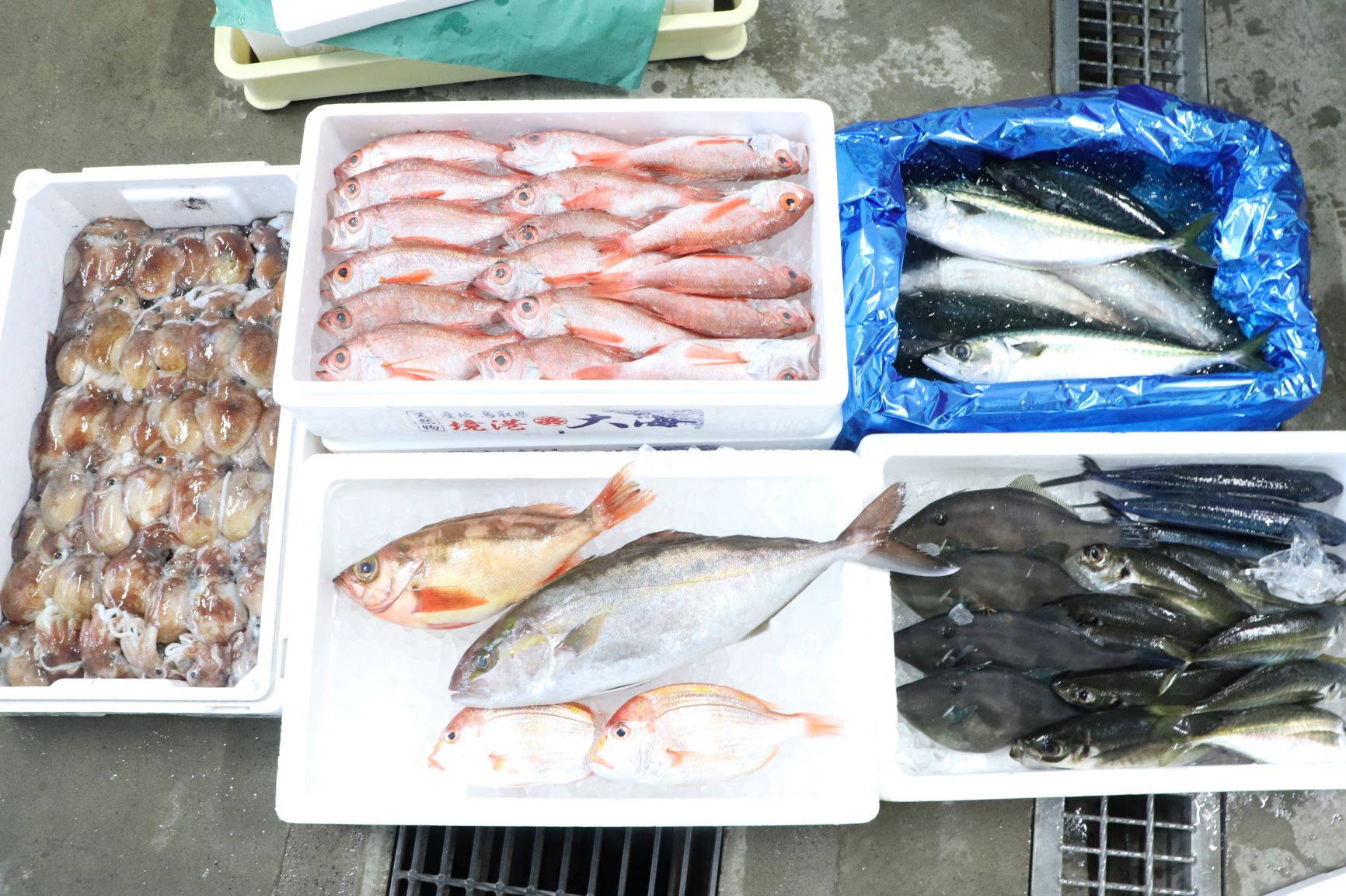 たくさんの種類の魚達