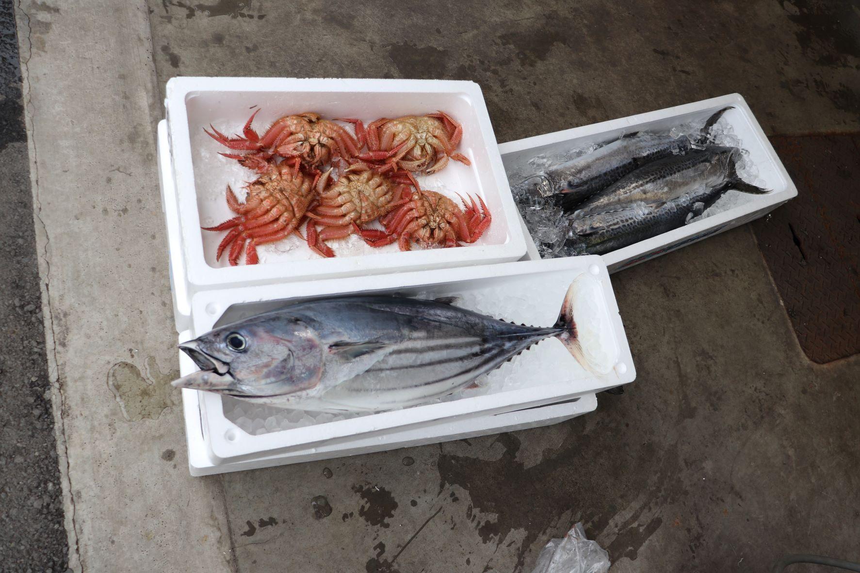 2種の魚とボタンエビ、毛ガニ!