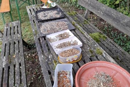 Verschiedene Samen für das nächste Jahr Foto: Christoph Schray