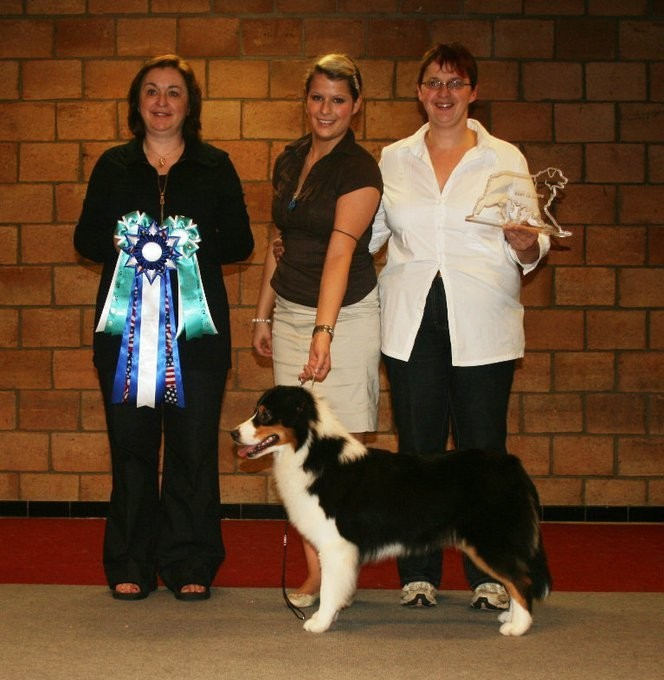ASCA CH.Moon Rise Betty Boop at 22 Months