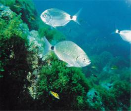 Buceo en las Islas Columbretes