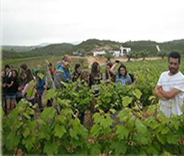 Visit Wineries Mas de  Randers. Guided tasting