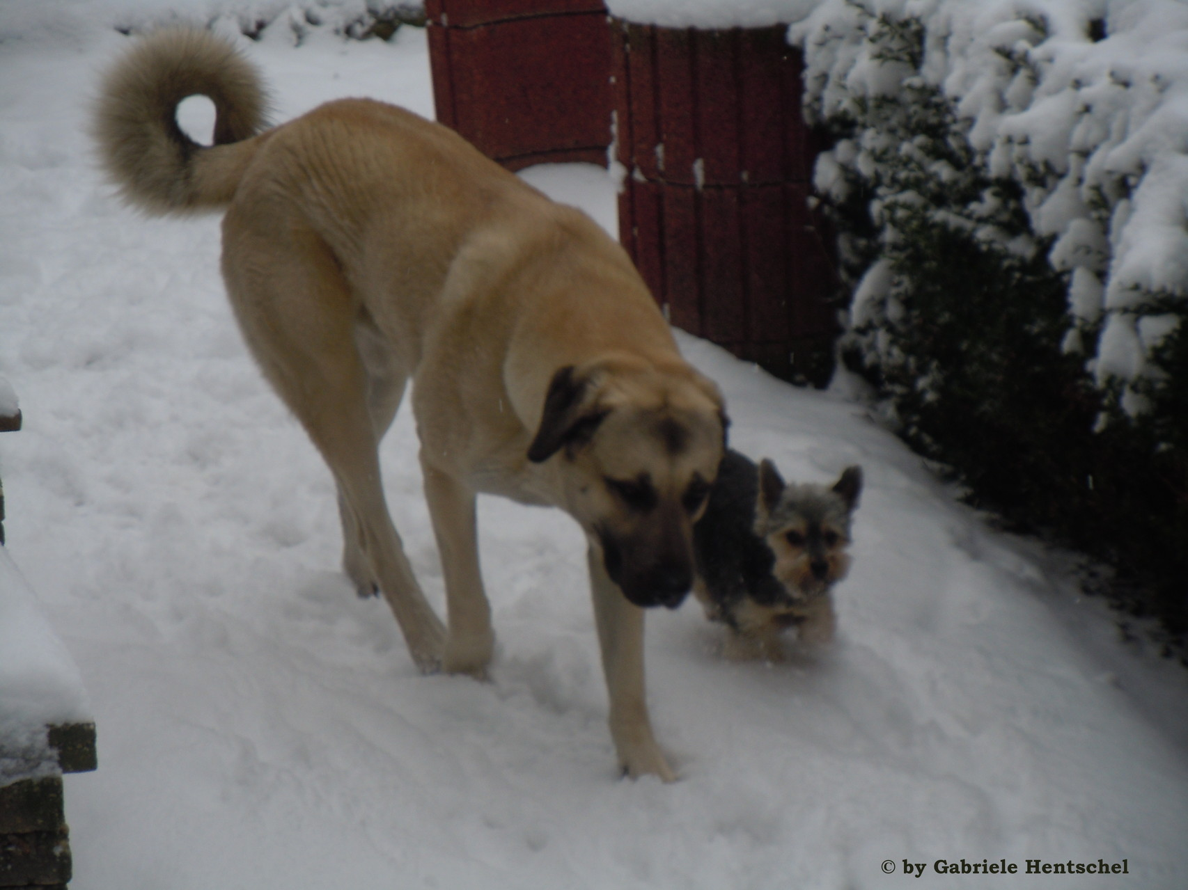 Pek und Dudu bei ihrem Rundgang. Bei jedem Wetter!