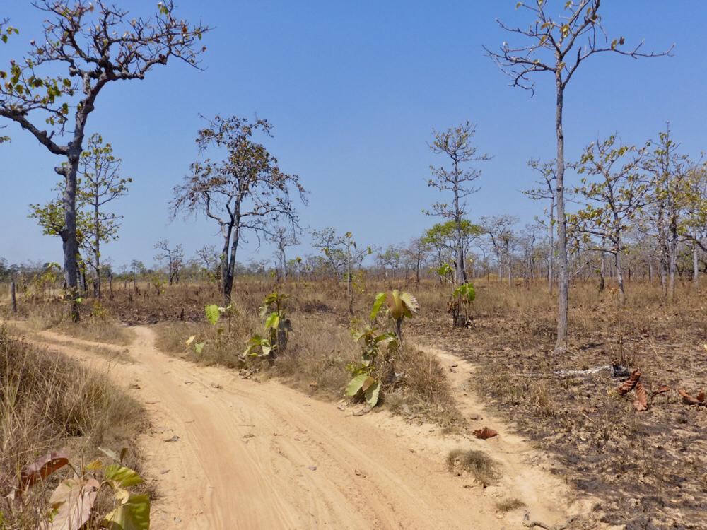 Sandy tracks between Siem Pang and O Samong