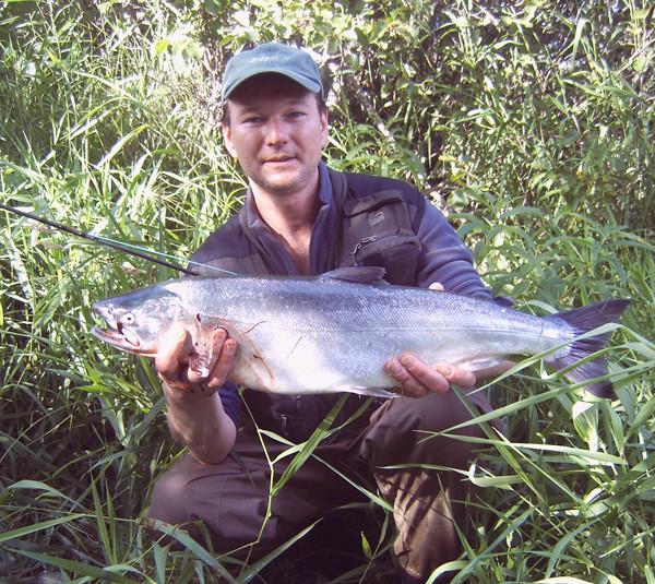 Alaska 2008 - Silberlachs