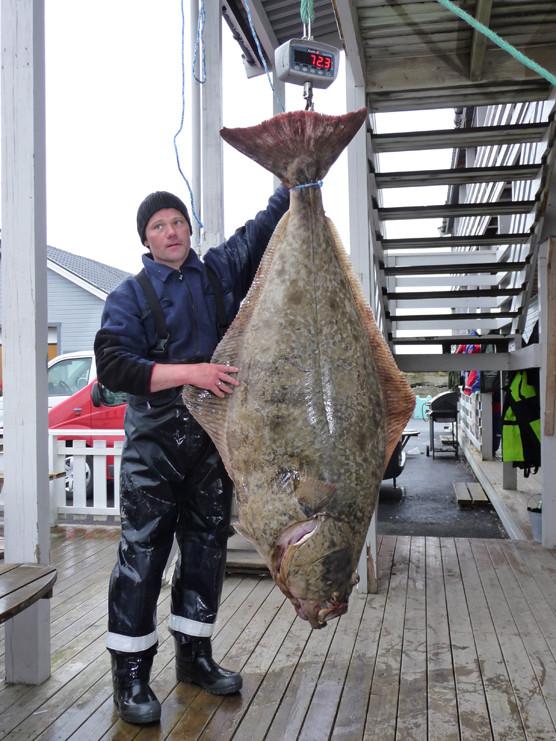 Heilbutt über 72 kg.Super!!!