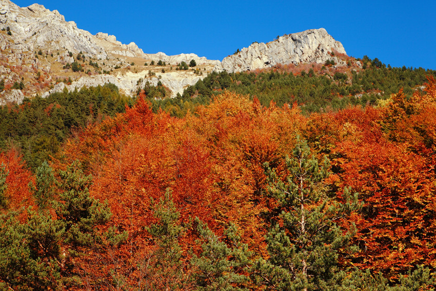 Foliage in val Tanaro
