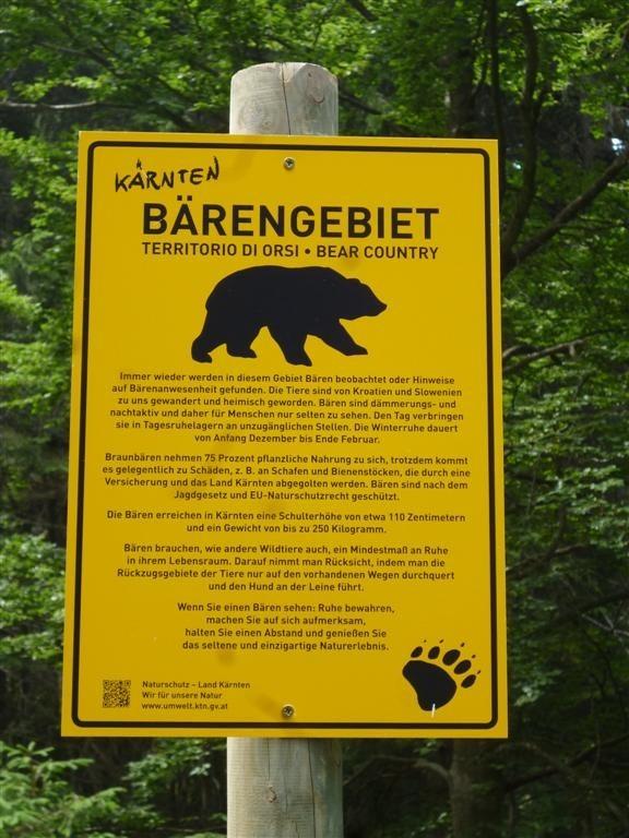 Y'a des ours par ici !