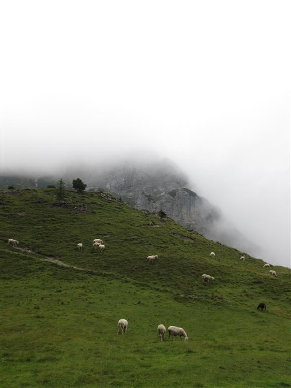 Petit alpage de bivouac sous les Drei Schroestern (2052m)