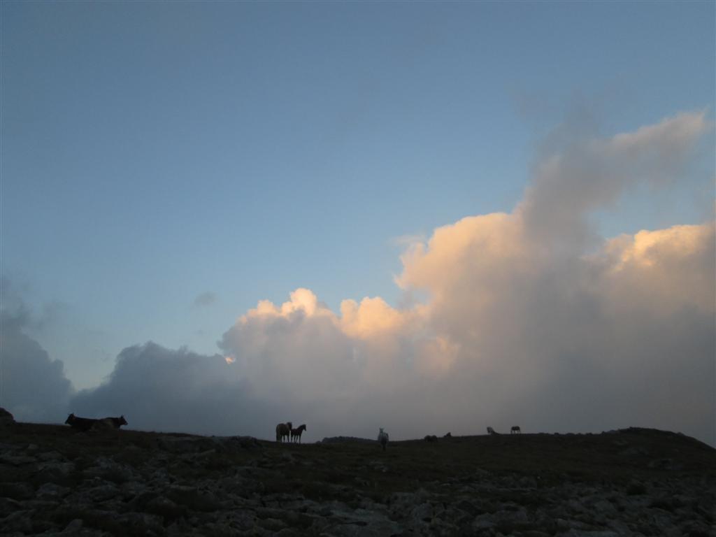 Depuis le bivouac, vaches et chevaux sur fond de brume