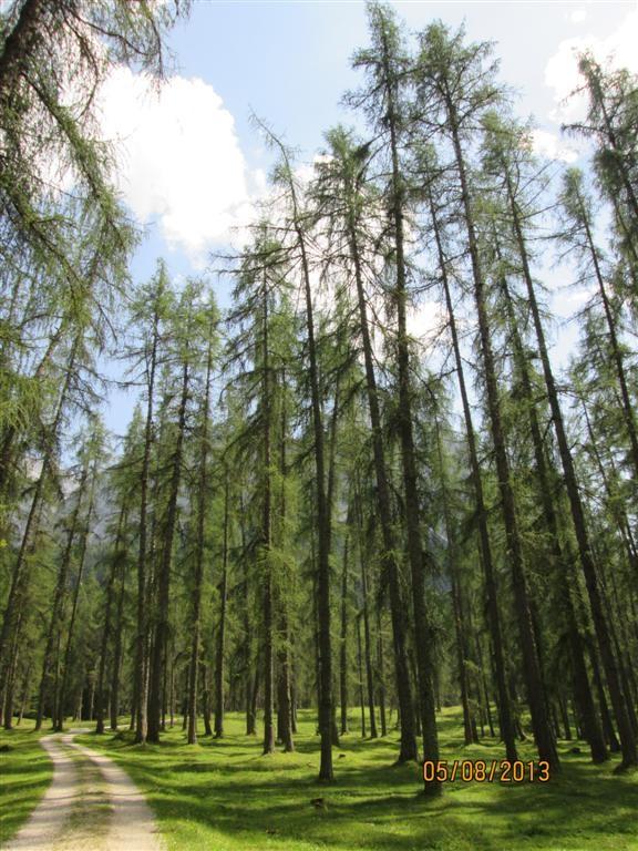 Belle forêt au dessus de Biberwier