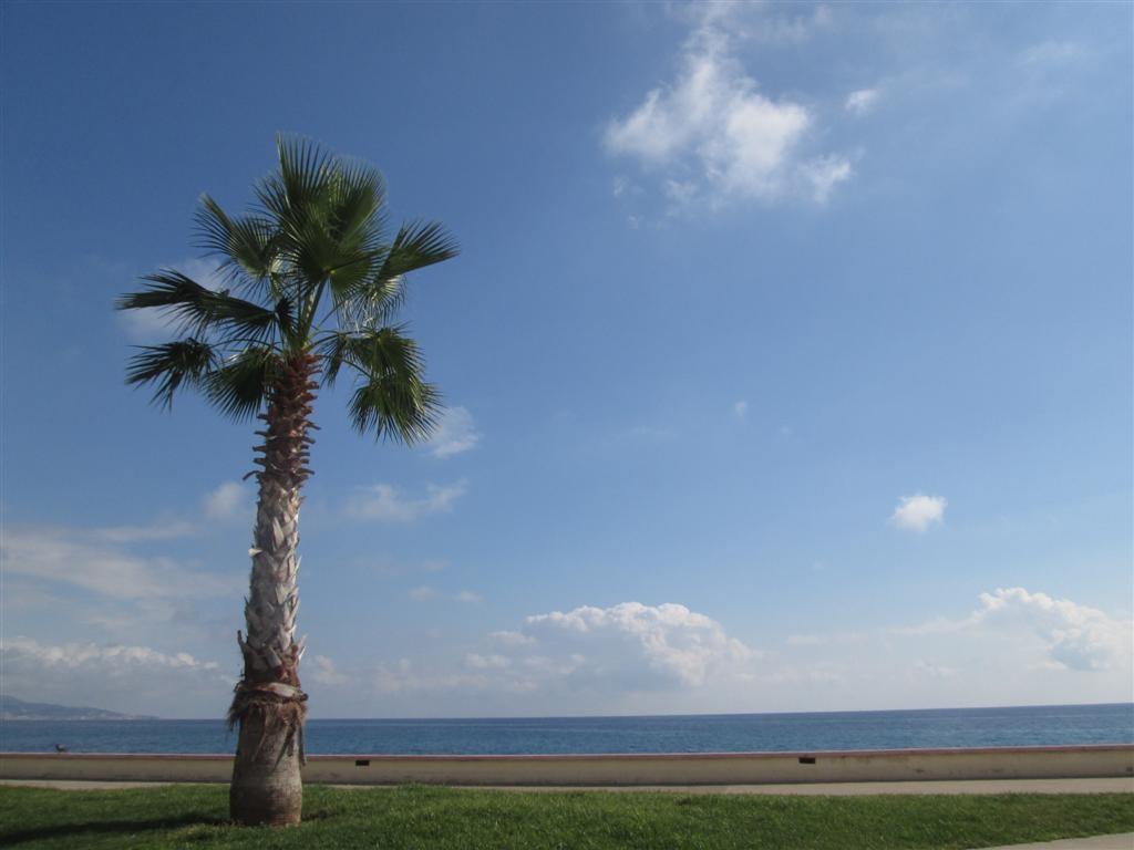 ... sous le soleil des palmiers !