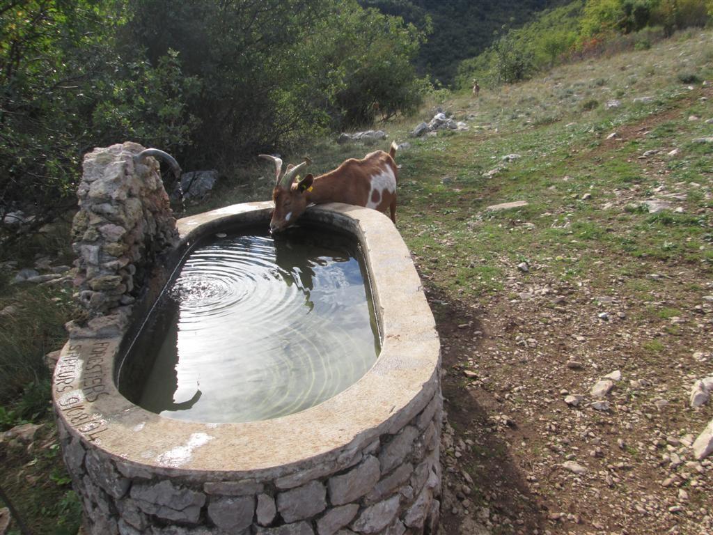 Dernière fontaine, dernières chèvres ...