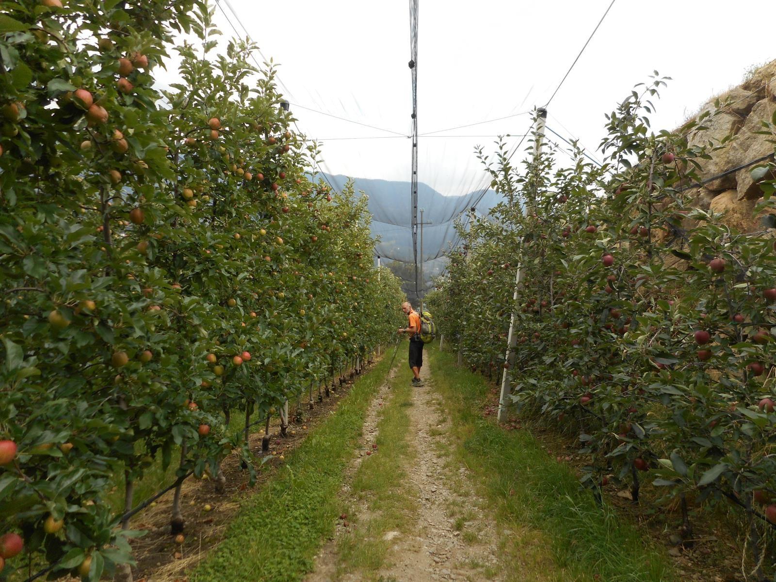le Sud Tirol, l'autre pays de la pomme !