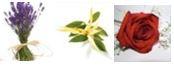 Beruhigung: Lavendel, Ylang-Ylang und Rose bei der Aromatherpie für Hunde