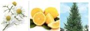 Erleichterung des Atmungssystems: Römische Kamille, Zitrone, Atlaszeder bei der Aromatherpie für Hunde