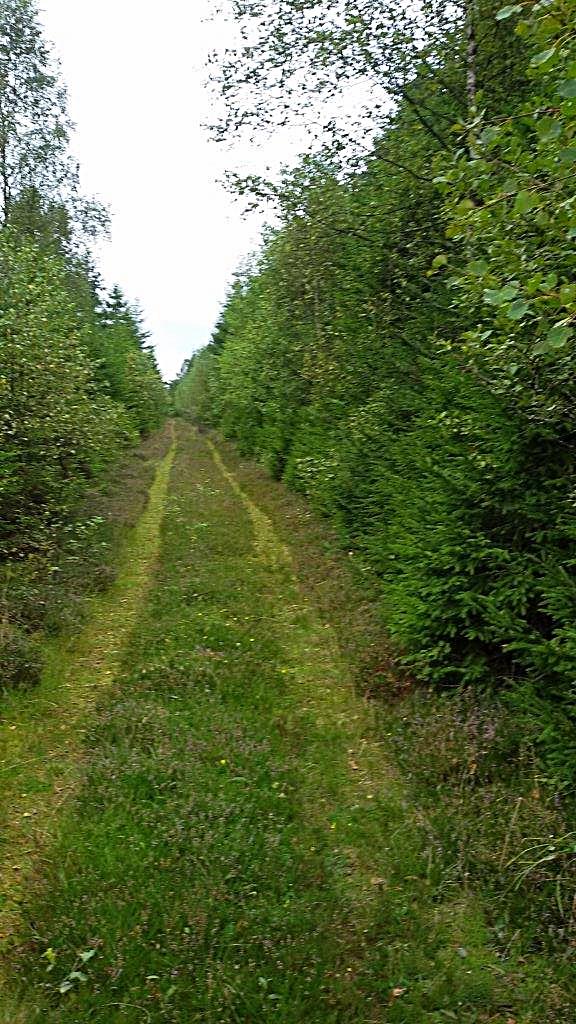 Grenzweg mit Heidekraut