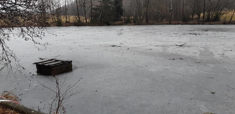 Der Teich ist noch zugefrorenen, aber das Eis ist an vielen Stellen schon zu dünn.