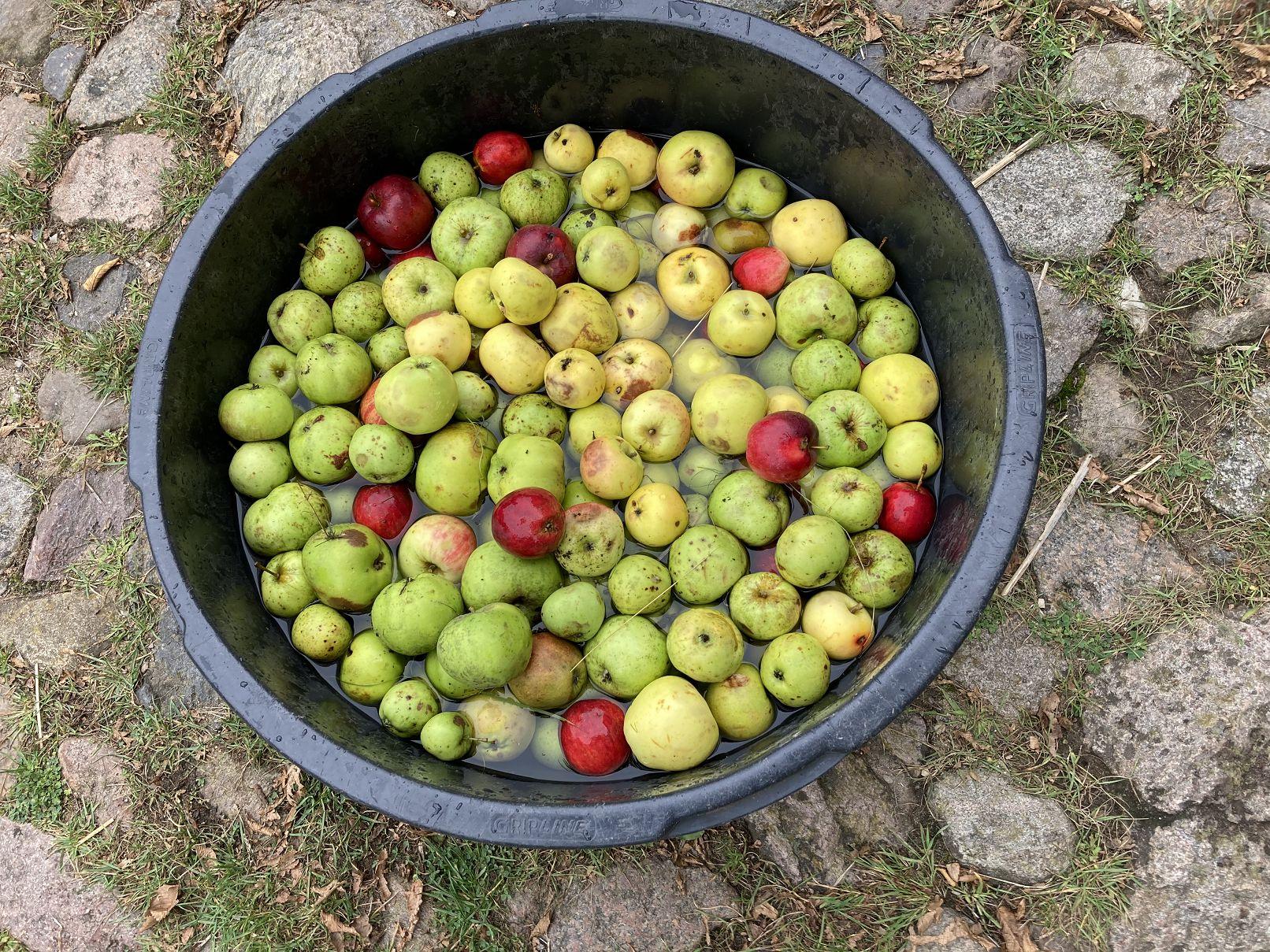 Alles Apfel für die 4c und 4d