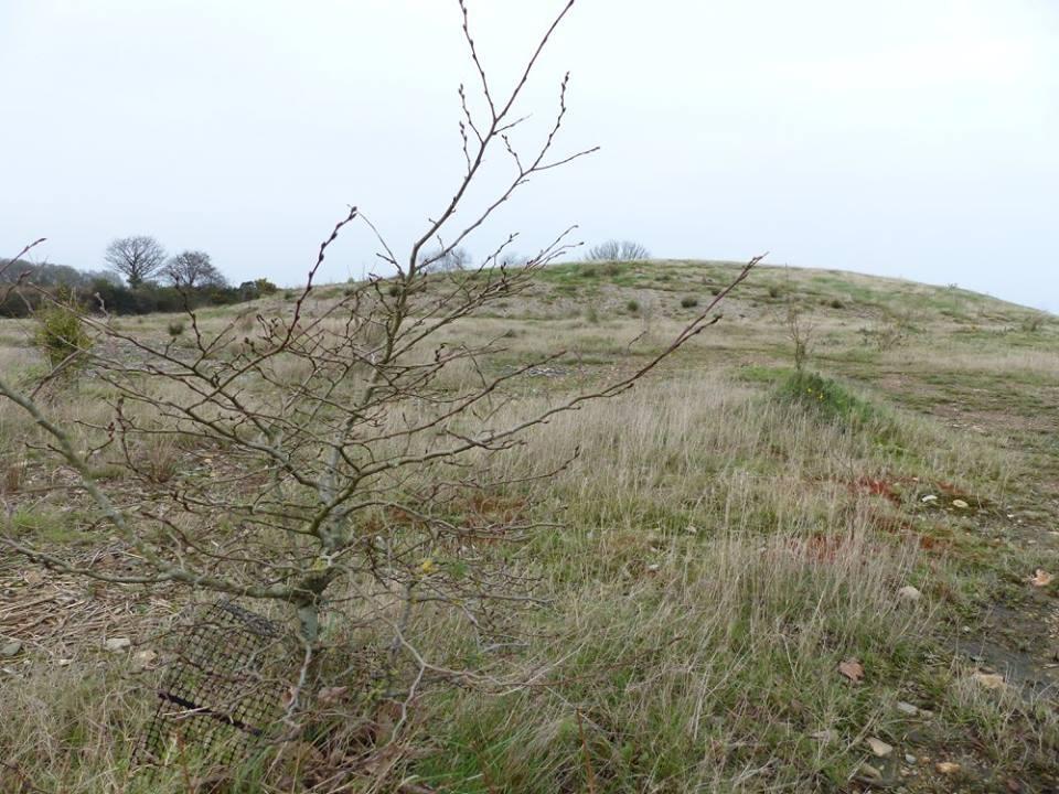 MERLEAC 2015 : Une tentative de plantations d'arbres sur la zone de remblais de l'ancien site minier de la Porte-aux-Moines